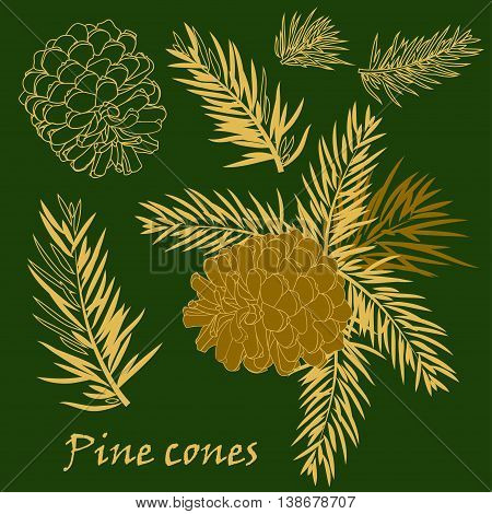 Fir tree branches with pine cone in golden color. Vector illustrations