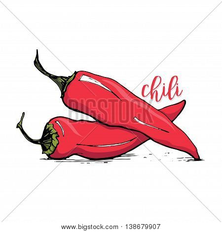 Red chilli pepper sketch style vector illustration isolated on white background. Spicy chili