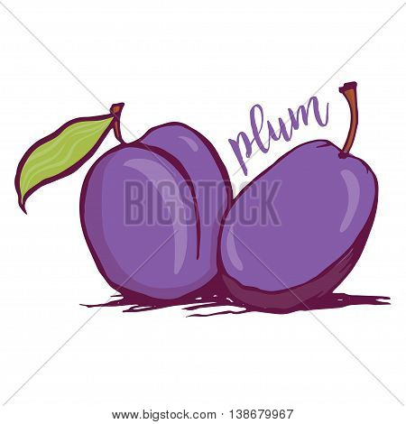 Plum sketch style vector illustration isolated on white background. Hand drawn couple of fresh ripe plums