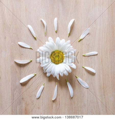 Daisy flower head with some petals torn off on wooden background