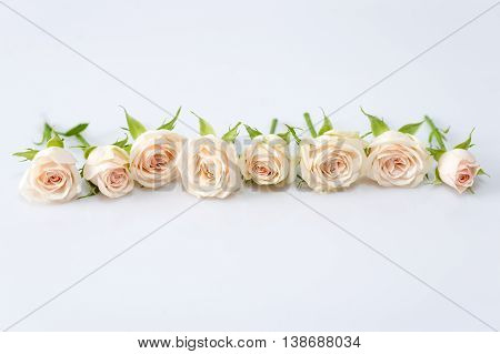 Roses lying in a row on white background