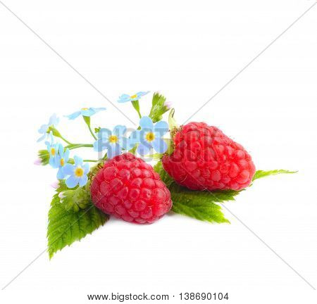 Ripe raspberries with leaf and forget-me-not flowers isolated on white background