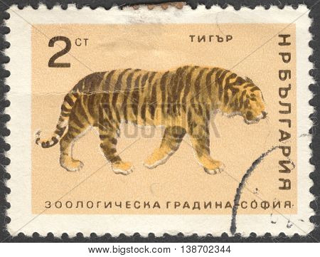 MOSCOW RUSSIA - JANUARY 2016: a post stamp printed in BULGARIA shows a tiger (Panthera tigris) the series