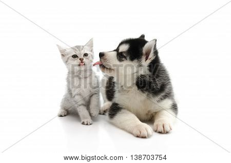 Cute puppy kissing cute tabby kitten on white background isolated