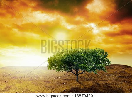 tree planted in dry land portrayed in a sunset moment