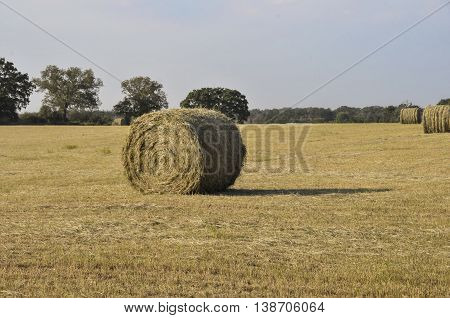 Round hay bail sitting in the middle of a cut field.