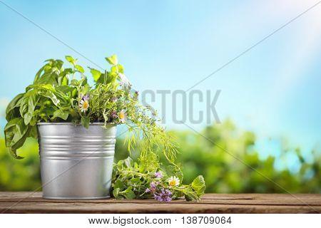 Fresh green basil in tin bucket on wood table