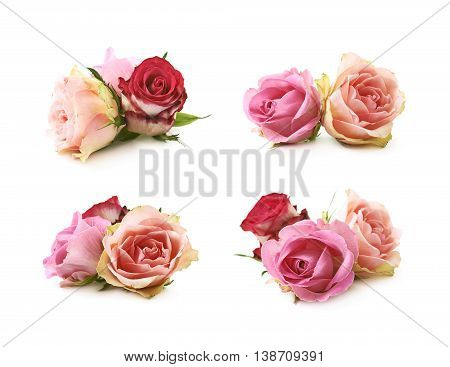 Rose buds composition isolated over the white background, set of four different foreshortenings