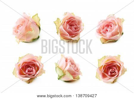 Single white rose bud isolated over the white background, set of six different foreshortenings