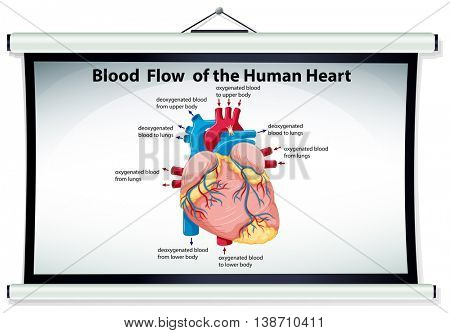Chart showing blood flow in human heart illustration