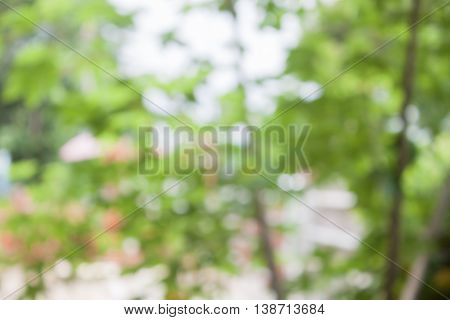 Abstract blurred green leaves background, stock photo