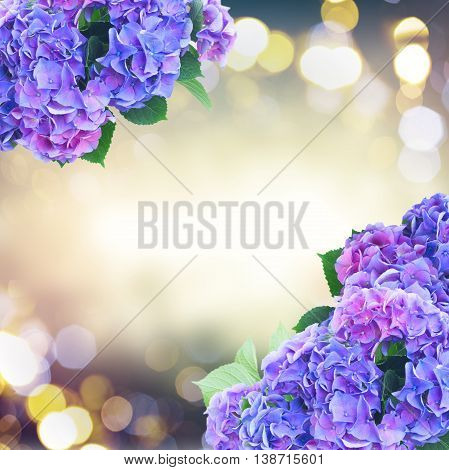 blue and violet hortensia flowerson fancy glimming bokeh background