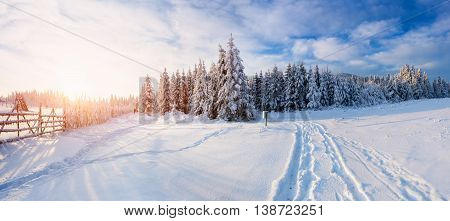 the winter road. magical winter snow covered tree. Sunset in the Carpathians. Ukraine, Europe