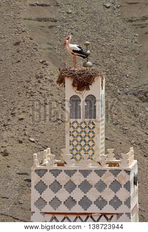 Stork's nest on the top of a minaret, Morocco