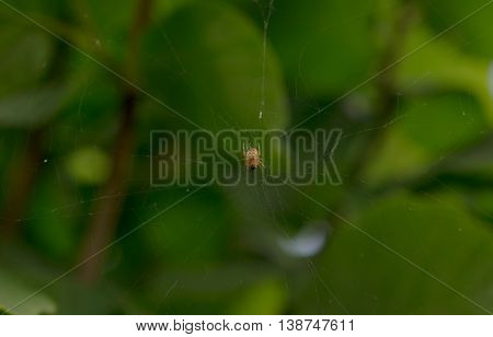 A large spider on its web. Close up