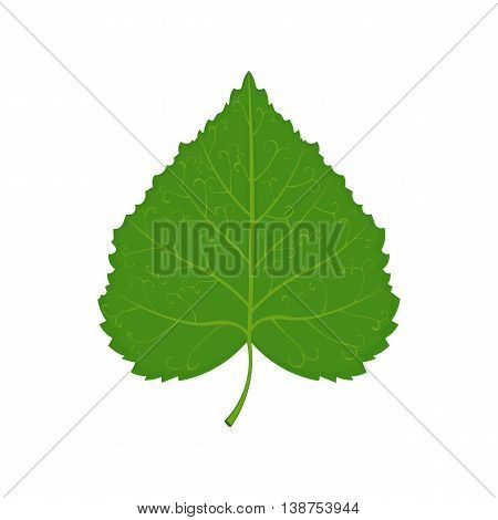 green linden leaf vector illustration isolated on a white background