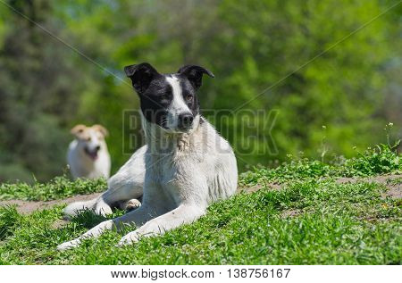Portrait of adorable stray dog sitting under spring sun
