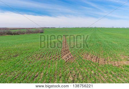 Ukrainian spring landscape with crop field .