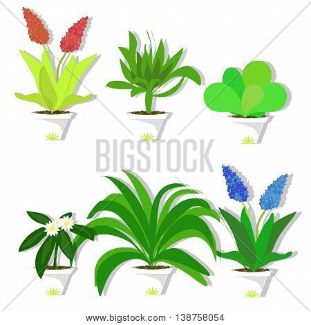 Set the potted plants, potted flowers, vector illustration, plants for the house and office