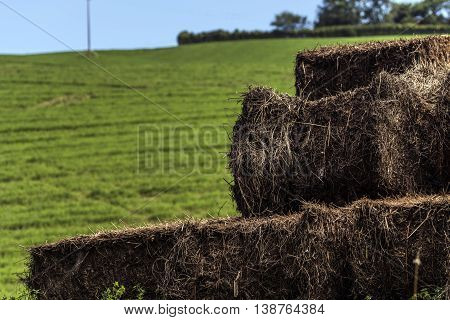 Hay bales on a field detail close up