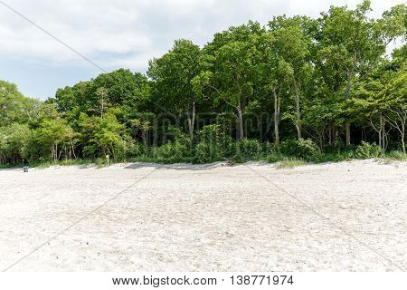 Trees and bushes grow on a sand dune at the Baltic Sea beach in Kolobrzeg in Poland