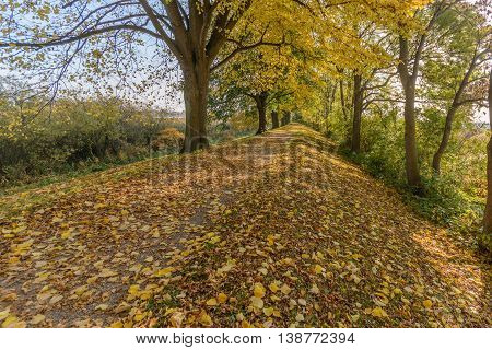 Golden colored  autum lane in  nature with foliage