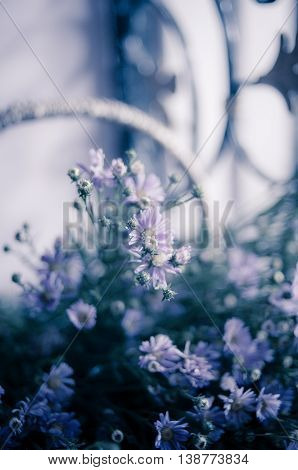 Beautiful violet  Aster amellus basket Flowers coffee