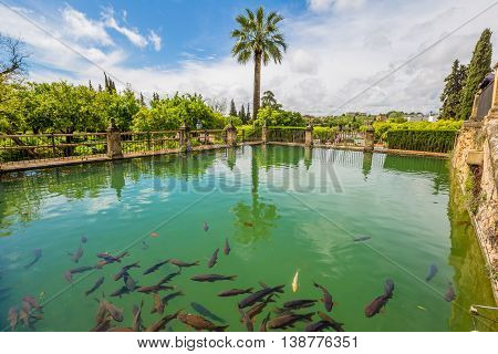 Cordoba, popular city of Andalusia in Spain. Decorative green pool with fish around the military fortress The Alcazar de los Reyes Cristianos in a sunny day.
