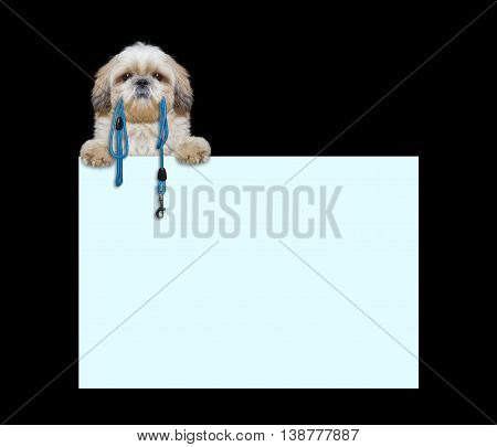 Cute dog is holding the leash in its mouth -- isolated on black next to the frame
