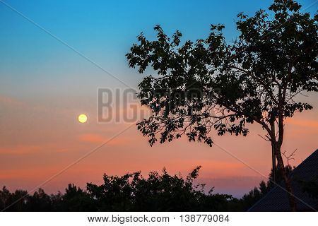 Sunset with full moon in front of the trees the evening sky