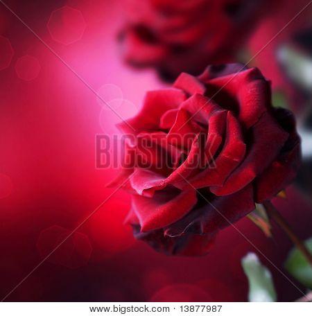 Red Roses design