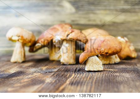 Porcini. Placer white wild mushrooms on a rustic wooden background.