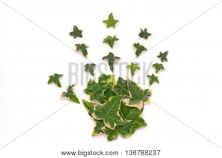 A photo composition made with ivy leaves forming a hand