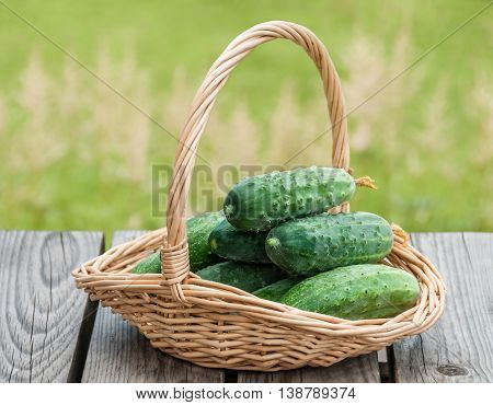 Cucumbers in a basket on a background of nature