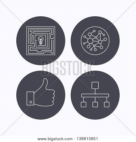 Global network, like and hierarchy icons. Maze linear sign. Flat icons in circle buttons on white background. Vector