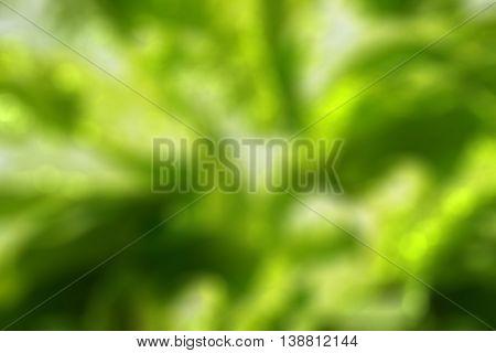 blurred of Romaine lettuce green vegetable bokeh background