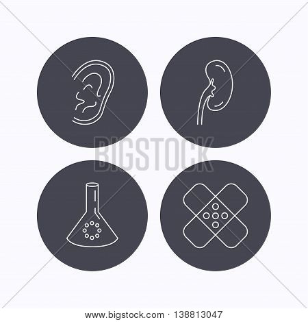 Lab bulb, medical plaster and ear icons. Kidney linear sign. Flat icons in circle buttons on white background. Vector