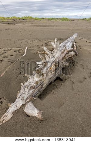 Close up of driftwood in the sand at Ocean City Beach in Washington.