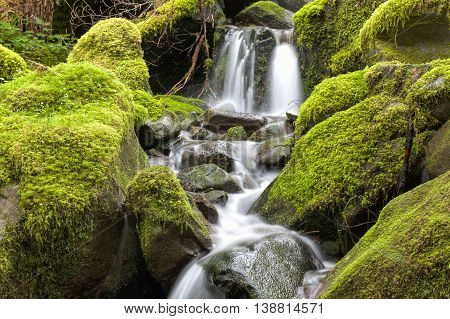 Close up of small waterfall and mossy rocks in Washington.