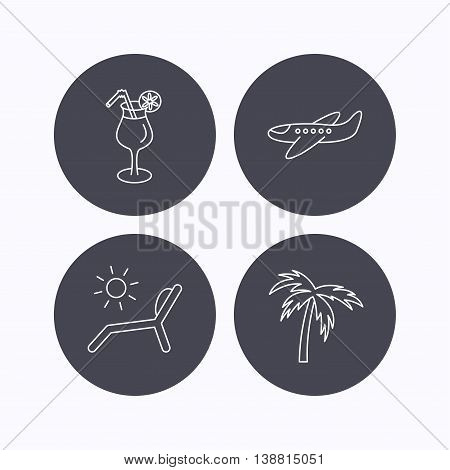 Airplane, deck chair and cocktail icons. Palm tree linear sign. Flat icons in circle buttons on white background. Vector