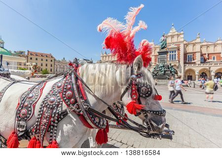 Cracow, Poland. Traditional horse carriage on the main old town market square. Cloth Hall and Mickiewicz Monument behind.