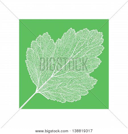 Vector skeletonized leaf . The graphic element may be used as a design background, business cards, postcards, etc.