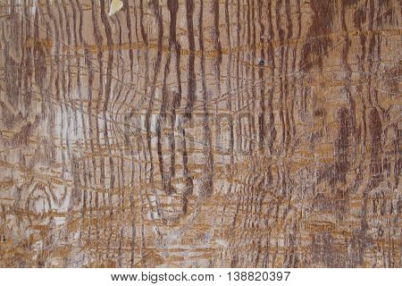 scratched up flat wood grain texture map