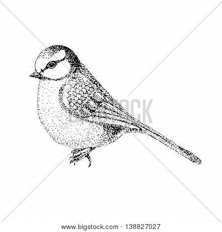 vector illustration bird blue tit. bird in graphic style.vintage illustration