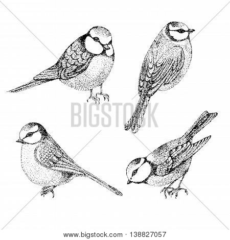 Flock of blue tits isolated over white background. set of birds blue tits. vector illustration