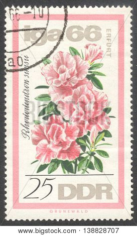 MOSCOW RUSSIA - JANUARY 2016: a post stamp printed in DDR shows a flower Rhododendron simsii the series