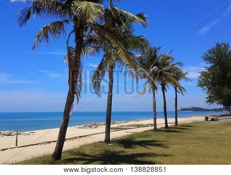 row of five side-lit coconut trees along a sandy beach, blue ocean behind them, peninsula in distance, Songkhla, Thailand