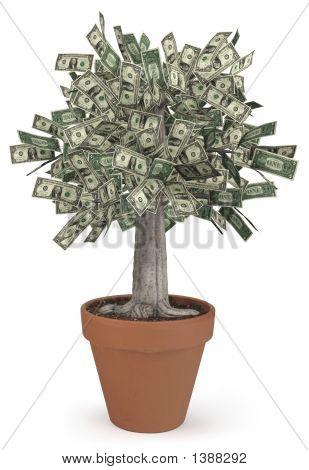 Árbol del dinero en maceta