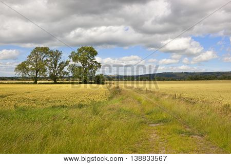 Wheat Fields And Ash Trees