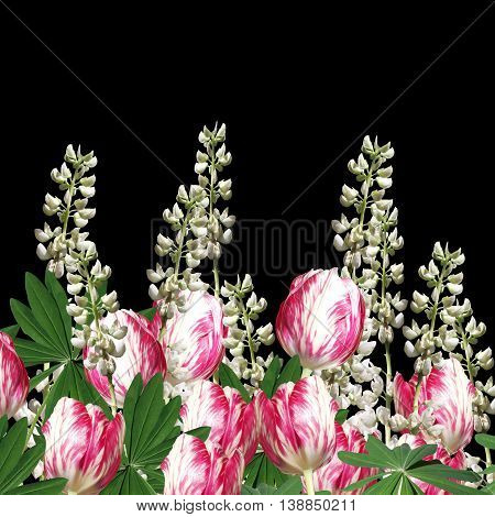 Beautiful floral background of white lupine and tulips